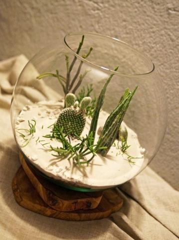 kaktusy i sukulenty zamknięte we wnętrzu szklanego terrarium pustynnego