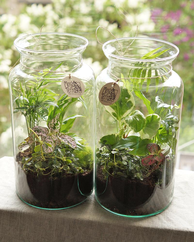 Szklane słoje wypełnione zieloną dżunglą roślin