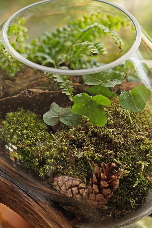 zielone serce mossarium
