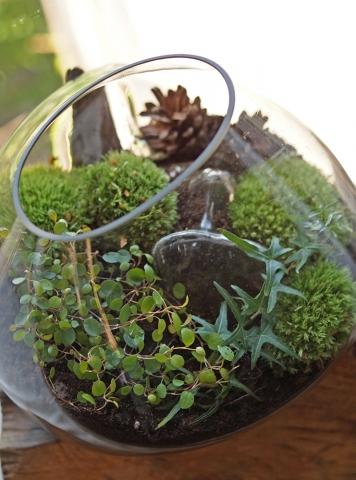 rośliny we wnętrzu szklanej kropli
